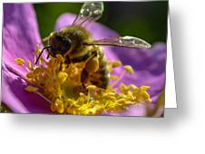 Honey Bee Greeting Card by Brian Stevens