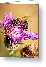 Honey Bee Greeting Card by Elena Elisseeva
