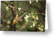 Hummingbird Greeting Card by Ernie Echols