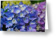 Hydrangea 4 Greeting Card by Eva Kaufman