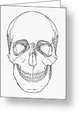 Illustration Of Anterior Skull Greeting Card by Science Source