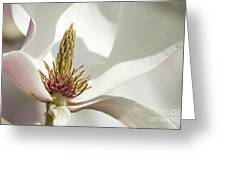 Magnolia Greeting Card by Sophie De Roumanie