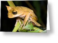Marsupial Frog Greeting Card by Dante Fenolio
