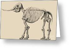 Mastodon Skeleton Greeting Card by Science Source