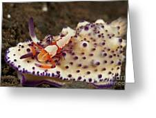 Nudibranch With Orange Emperor Shrimp Greeting Card by Mathieu Meur
