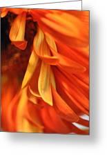 Orange Gerbera Daisy 4 Greeting Card by Ronda Broatch