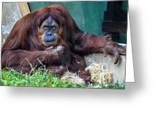 Orangutan Greeting Card by Brian Stevens