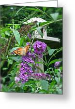 Painted Lady Butterfly Greeting Card by Nancy Patterson