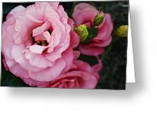 Pink Delight Greeting Card by Bruce Bley