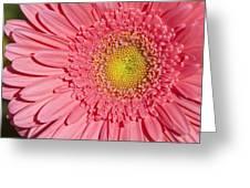 Pink Gerber Greeting Card by Al Hurley