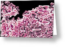 Salmonella Bacteria, Sem Greeting Card by