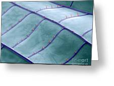 Sem Of Dragonfly Wing Greeting Card by Ted Kinsman