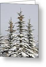 Snow Covered Evergreen Trees Calgary Greeting Card by Michael Interisano