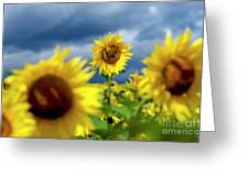 Sunflowers Greeting Card by Bernard Jaubert