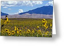 Sunflowers Sand N Sky Greeting Card by Scotts Scapes