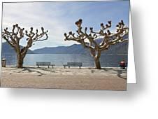 sycamore trees in Ascona - Ticino Greeting Card by Joana Kruse