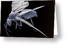 Winged Ant, Sem Greeting Card by Steve Gschmeissner