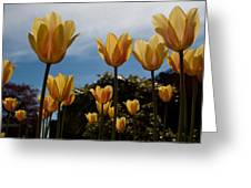 2012 Tulips 06 Greeting Card by Robert  Torkomian