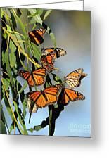 Butterflies Greeting Card by Marc Bittan
