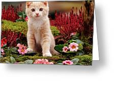 Kitten Greeting Card by Jane Burton