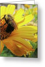 Bee Greeting Card by Michele Caporaso