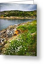 Atlantic Coast In Newfoundland Greeting Card by Elena Elisseeva