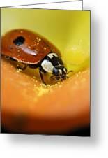 Beetle Greeting Card by Igor Sinitsyn