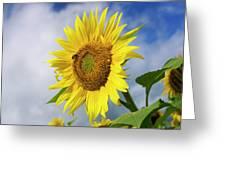 Close Up Of Sunflower Greeting Card by Bernard Jaubert