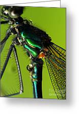 Dragonfly In Drops Greeting Card by Odon Czintos