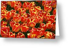 Flaming Tulips Greeting Card by Michele Burgess