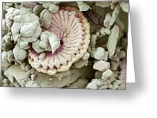 Fossil Debris In Chalk, Sem Greeting Card by Steve Gschmeissner