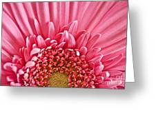 Gerbera Flower Greeting Card by Elena Elisseeva