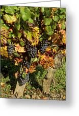 Grapes Growing On Vine Greeting Card by Bernard Jaubert