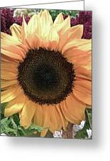 Sunflower Greeting Card by Kristen Pagliaro