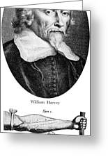 William Harvey, English Physician Greeting Card by Science Source
