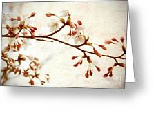 Cherry Blossoms Greeting Card by Charline Xia
