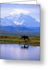 Denali National Park Greeting Card by John Hyde - Printscapes