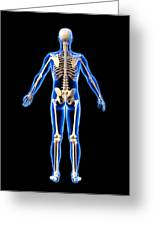 Male Skeleton, Artwork Greeting Card by Roger Harris