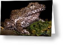 Rusty Robber Frog Greeting Card by Dante Fenolio