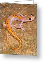 Cave Salamander Greeting Card by Dante Fenolio