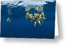 Tropical Seaweed Greeting Card by Alexis Rosenfeld