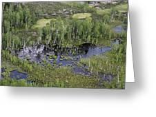 Tunguska Forest Greeting Card by Ria Novosti
