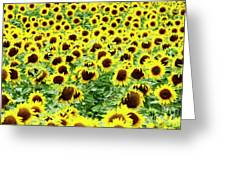 Field Of Sunflowers Greeting Card by Bernard Jaubert