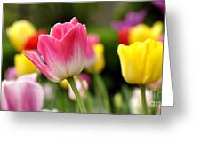 Tulip Garden University Of Pittsburgh Greeting Card by Thomas R Fletcher