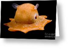 Flapjack Octopus Greeting Card by Dante Fenolio