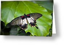 A Butterfly Rests On A Leaf Greeting Card by Taylor S. Kennedy
