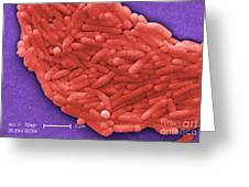 Salmonella, Sem Greeting Card by Science Source