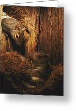 A A Baby Eastern Gray Squirrel Sciurus Greeting Card by Chris Johns