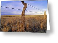 A Barbed Wire Fence Stretches Greeting Card by Gordon Wiltsie
