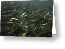 A Bed Of Sea Grass, Posidonia, Ripples Greeting Card by Jason Edwards